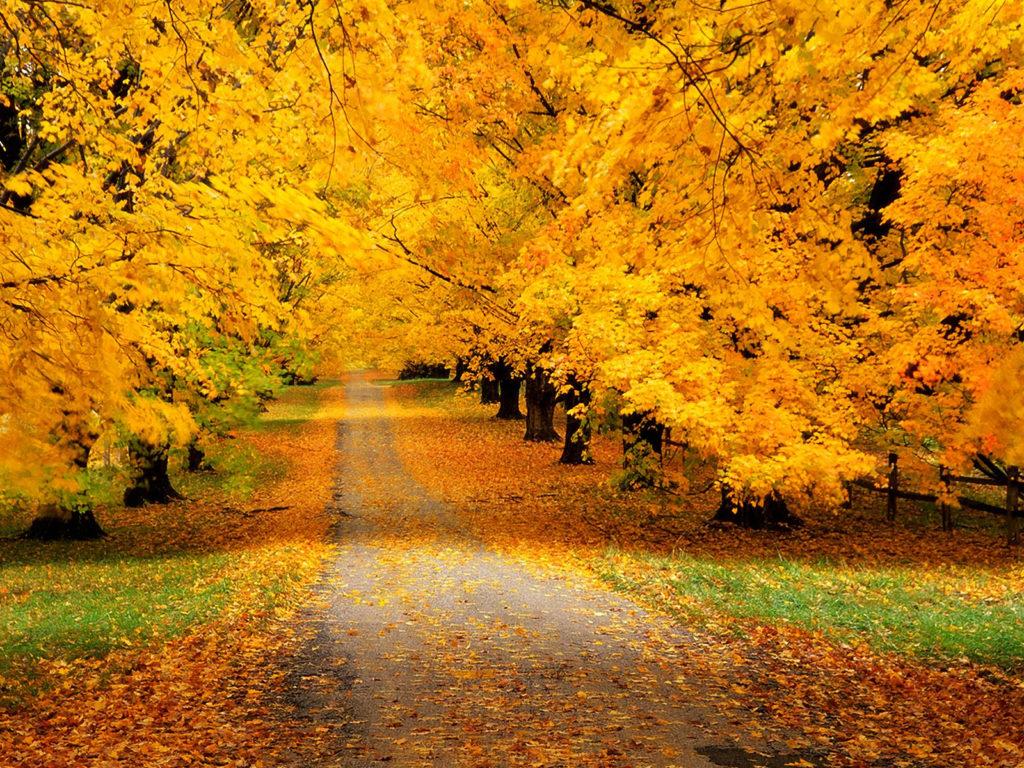 Стихотворение Александра Сергеевича Пушкина «Осень»
