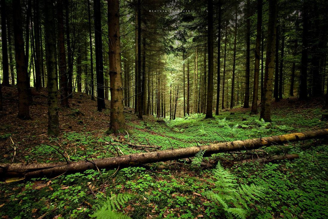 Как определить север или юг в лесу без компаса?